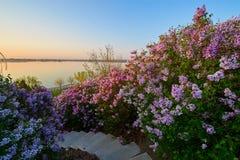 美好的花日出风景 库存照片