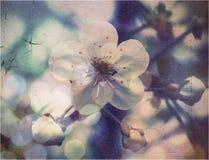 美好的花春天 库存图片