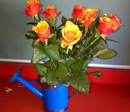 美好的花束日重点查出橙色玫瑰s形状华伦泰白色 免版税库存图片