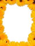 美好的花框架黄色 免版税库存图片