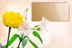 美好的花玫瑰白色 免版税库存照片