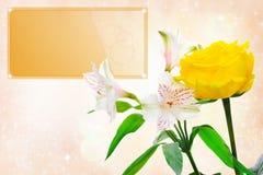 美好的花玫瑰白色 免版税图库摄影