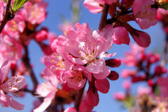 美好的花粉红色春天 库存图片