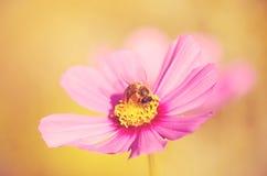 美好的花粉红色 库存照片