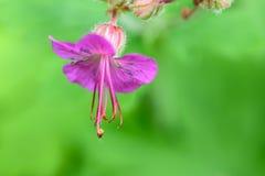 美好的花紫色 库存图片