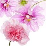 美好的花背景 免版税库存图片