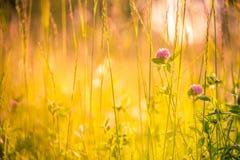 美好的花草甸夏天 镇静自然背景构思设计 图库摄影