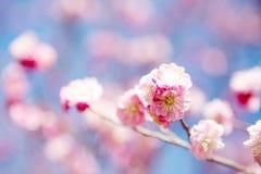 美好的花绽放在春天 库存照片