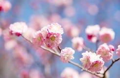 美好的花绽放在春天 图库摄影
