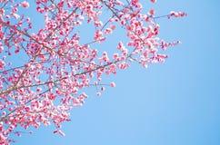美好的花绽放在春天 免版税库存照片
