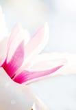 美好的花绽放在春天 免版税图库摄影