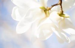 美好的花绽放在春天 库存图片