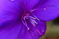 美好的花紫色 免版税库存图片