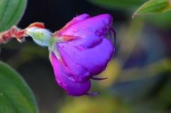 美好的花紫色 免版税库存照片