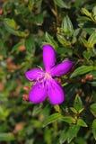 美好的花紫色 免版税图库摄影