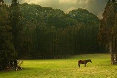 美好的草原风景 库存图片