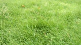 美好的草庭院季节 图库摄影