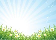 美好的草甸春天 免版税库存图片