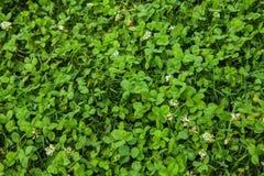 美好的草绿色纹理 免版税库存照片