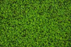 美好的草绿色纹理 免版税库存图片