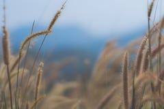 美好的草花背景,选择聚焦 免版税库存照片