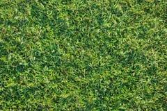 美好的草绿色 图库摄影