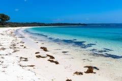美好的蓝色海水海草海岸线 免版税库存图片