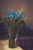 美好的蓝色矢车菊草本束在木桌,与阳光的背景上的一个玻璃花瓶开花 新的成人 图库摄影