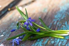 美好的蓝色snowdrops在一张织地不很细木桌上说谎 图库摄影
