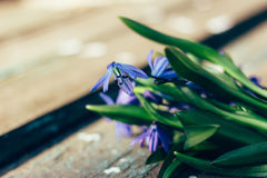 美好的蓝色snowdrops在一张织地不很细木桌上说谎 库存照片
