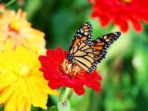 美好的蝶粉花开会 免版税库存图片