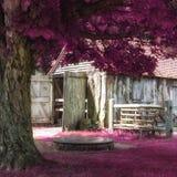 美好的超现实的代替色的森林风景 免版税库存照片