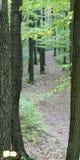 美好的路结构树冬天之字形 库存照片