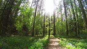美好的通配本质 一串小足迹 白天风景 绿草他们蓝色花 森林在夏天 股票录像