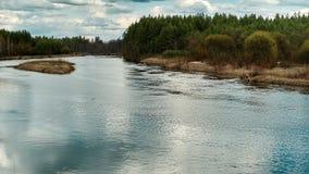 美好的野生生物风景 在森林时间膝部中间的河 股票视频
