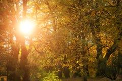 美好的金黄秋天风景 免版税库存照片