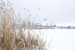 美好的降雪 33c 1月横向俄国温度ural冬天 库存图片