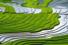 美好的露台的米领域在Mu Cang柴,越南 免版税库存图片