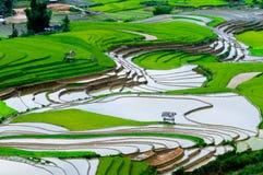 美好的露台的米领域在Mu Cang柴,越南 免版税图库摄影