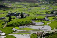 美好的露台的米领域在Mu Cang柴,越南 库存照片