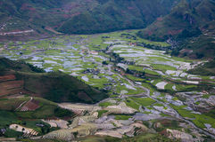 美好的露台的米领域在Mu Cang柴,越南 免版税库存照片