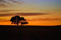 美好的非洲日落横向 免版税库存照片