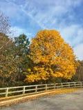 美好的颜色这个秋天 免版税库存照片