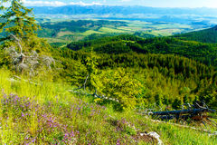 美好的风景、森林和草甸和湖有山的在背景中 斯洛伐克,中欧 免版税库存照片