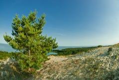 美好的风景、沙丘、木头和海 库存照片