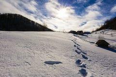 美好的风景与太阳光亮的冬日 图库摄影