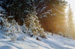 美好的风景冬天多雪的森林 库存照片