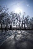 美好的风景冬天 免版税库存照片