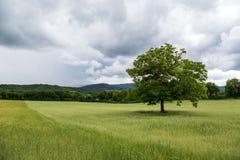 美好的风景和孤立树在托斯卡纳 库存照片