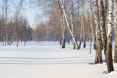 美好的风景在冬天公园,森林 树的阴影在雪,拷贝空间的 免版税库存图片